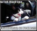 funny-pictures-cat-drive-thru.jpg