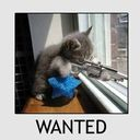 wantedkitty.jpeg